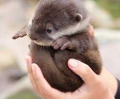 Otter Butt Ball
