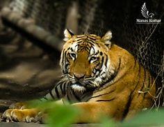 Manas Kumar - Google+