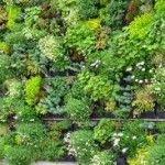 Aujourd'hui on passe au jardin pour faire un peu de #jardinage. Comment placer des #jardinières sur les #murs ?   http://www.amenager-ma-maison.com/terrasse-et-jardin/jardiniere/plastique/comment-placer-des-jardinieres-sur-les-murs-37-n  Bonne lecture et bon shopping à tous sur www.amenager-ma-maison.com !