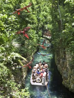 In Xcaret Park you will find the best attractions and activities in Cancun and Riviera Maya, Mexico. Enjoy with your family natural and cultural attractions on the Caribbean Sea in Xcaret, Mexico. me enamore! Cancun Vacation, Mexico Vacation, Mexico Travel, Vacation Trips, Dream Vacations, Vacation Spots, Mexico Xcaret, Cancun Mexico, Cozumel