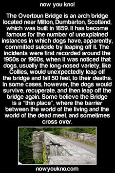 I don't believe in the worlds of the living and the dead meeting, but this is kinda creepy. Though my mom and I theorized that there may be some sound that dogs can hear there that confuses them.