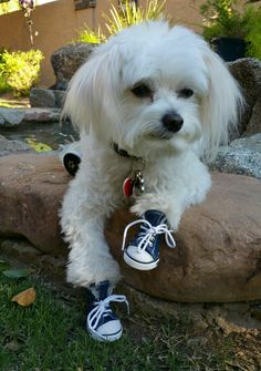 90 Best Dogs Wearing Boots Amp Shoes Images Dog Boots