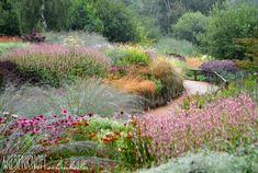 Wiesenknopfschreibselei: Millennium Garden, Pensthorpe Park, England - designed by Piet Oudolf - Teil 1