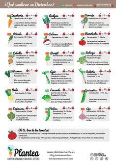 El Huerto en Macetas: ¿Qué sembrar en diciembre?