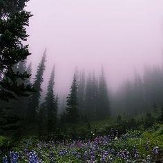 Memories of mountains and trees... . . . . . . . . . . . #mtrainier #paradise #mist #nature #natural #pacificnorthquest #pnw #igers_Seattle #LiveWashington #thepnwphotos #wonderful_places #thatpnwlife #pnwonderland #pnwdiscovered #bestofnorthwest #fog #cool_capture_ #master_shots #special_shots #allshots_ #ig_brilliant #jj_skylove #rsa_outdoors #rsa_fog #watchthisinstagood #instagood #photooftheday #ig_worldclub
