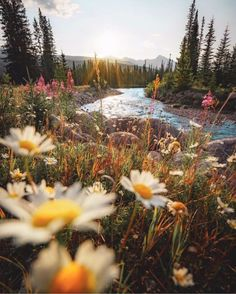 photo scenery Tune Your Home To The Energy Of Manifesting Magic! Nature Aesthetic, Flower Aesthetic, Beautiful World, Beautiful Places, Beautiful Flowers, Foto Macro, All Nature, Adventure Is Out There, Pretty Pictures