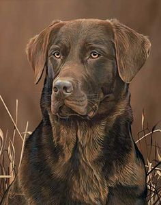 Loyal Companion-Chocolate Lab Painting by Scot Storm