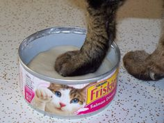 Pet-Paws Impression Process. Tips for getting pets paw-prints