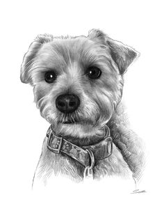 Awesome Holiday Gift Idea for any Pet Owner - Pencil Sketch Pet Portrait from your photo. Great personalized gift only from GiveAmasterpiece.com