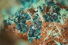Haydeeite, Cu3Mg(OH)6Cl2, Atacamite, Cu2(OH)3Cl, Haydee Mine, Salar Grande, El Tamarugal Province, Tarapacá Region, Chile. Fov 2.5 mm. Blue Haydeeite with green Atacamite. Copyright: © Stephan Wolfsried