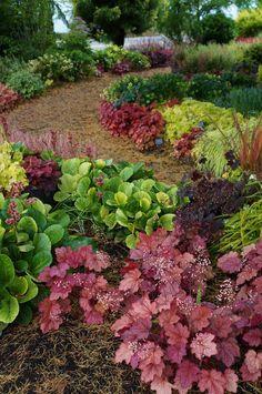 Shade Garden (Heuchera, Bergenia) | Flickr - Photo Sharing!