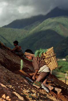 Steve McCurry - NEPAL. Monsoons. August 1983.