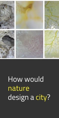 How would nature design a city? Ever wondered about that? 🤔 Dr. Melissa Sterry shared the example of Bionic City® through our website. Bionic City® asks this very question, exploring the potential of biodesign, biomimetics, biotechnology, and biology 👩🔬 in the built environment 🏡 of the now, near, and far future. #NewEuropeanBauhaus #EUGreenDeal #Science #Research #Innovation #EU 📸 Microscopic storyboard / Source: © Bioratorium Limited & Melissa Sterry Concrete Path, Co Design, Built Environment, Biotechnology, Your Voice, Bauhaus, Storyboard, Biology, Exploring