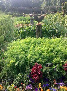 10 inspiring garden ideas from P. Allen Smith's Moss Mountain Farm