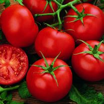 Tomato (Standard) Moneymaker Seeds