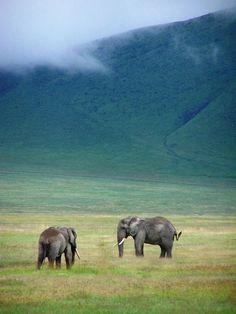 elephants grazing.