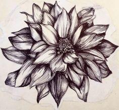 Flower illustration created with biro black pen Biro Drawing Sketches, Pen Sketch, Drawing Artist, Graphite Drawings, Art Drawings, Pencil Drawings Of Flowers, Pencil Drawing Tutorials, Drawing Flowers, Biro Art