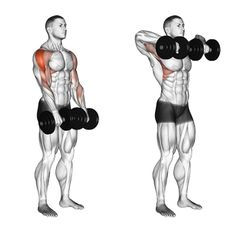 7 Bicep Workouts - Best Exercises for Beginners at the Gym Going into the gym without a plan is a bad idea. These fundamental workouts are a great start. Here are 7 Bicep Workouts to Do at The Gym: 5 Day Workout Routine, Workout Routines For Beginners, Workout Session, At Home Workouts, Biceps Workout At Home, Gym Workouts For Men, Gym Tips, Workout Men, Ace Fitness