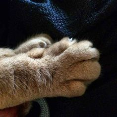 Hello. How is your day? Do you need some peets?