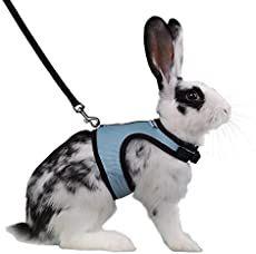 Bringing Home a New Bunny - Thriving On Ordinary Bunny Leash, Bunny Supplies, Pet Supplies, Raising Farm Animals, Bunny Care, Pet Rabbit, Little Pets, Dog Harness, Diy Stuffed Animals