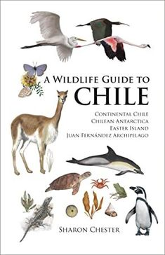 This is the first comprehensive English-language field guide to the wildlife of Chile and its territories--Chilean Antarctica, Easter Island, Juan Fernandez, and San Felix y San Ambrosio. From bats to The Tourist, Juan Fernandez, Marine Environment, Easter Island, Field Guide, Got Books, Antarctica, Archipelago, Book Photography