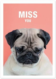 Miss You Tap the link for an awesome selection cat and kitten products for your feline companion!
