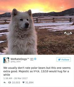 We rate dogs Funny Animal Pictures, Cute Funny Animals, Cute Baby Animals, Dog Pictures, Funny Dogs, Animals And Pets, Cute Puppies, Cute Dogs, Dogs And Puppies