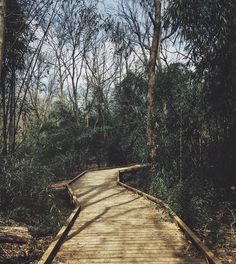 It's spring, y'all. Get outside and explore! Photo by the.wolfshe at the Lake Conestee Nature Park Boardwalk // yeahTHATgreenville
