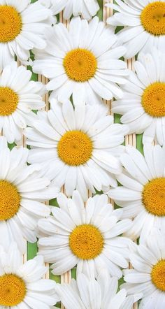 Daisy Wallpaper, Nature Iphone Wallpaper, Sunflower Wallpaper, Iphone Background Wallpaper, Best Iphone Wallpapers, Cute Wallpapers, Wallpaper Ideas, Flowers Free Download, Tropical Background