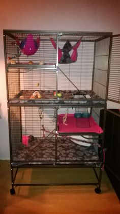 Our first pet rats house!