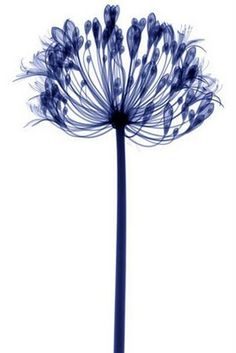 Curious, Funny Photos / Pictures: Flowers in X-Ray - 19 Pics