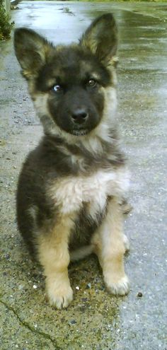 A picture of my dog when he was still a little puppy. http://ift.tt/2hIZ1mw