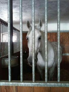 Goats, Horses, Photography, Animals, Photograph, Animales, Animaux, Fotografie, Photoshoot