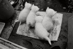 耳の不自由な猫とおばあちゃんの暮らしを写した写真が穏やかで癒される - Spotlight (スポットライト)
