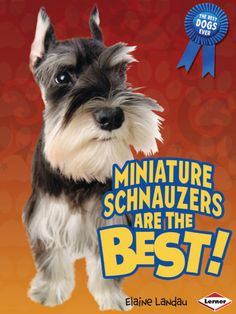 Miniature Schnauzers are the Best!