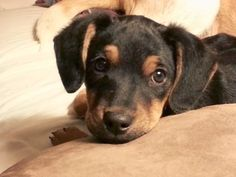Precious puppy is looking for forever home.