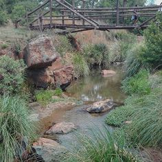 Just a few kilometers South of Johannesburg, is this veey scenic nature reserve. Each trail is cleary marked, there are several species of birds as well zebras, springbok, black wildebeest to look out for. Nature Reserve, Bird Species, Zebras, Hiking Trails, Garden Bridge, South Africa, Birds, Outdoor Structures, Explore