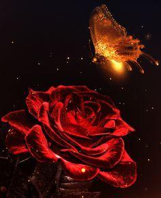 Rosa vermelha repleta de amor - Indriso - Poetas e Escritores do Amor e da Paz