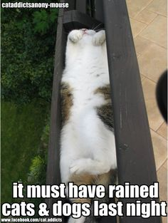 Rained cats and dogs