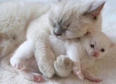 Mummy Love's Her Baby Kitten