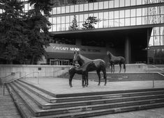 Black and White Canadian Nature, Horse Sculpture, Alberta Canada, Calgary, Horses, Black And White, Landscape, Building, Silver