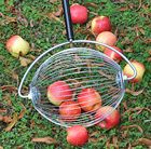 Perfect for collecting windfall apples