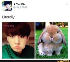 Cutest bunny ever and a rabbit's next to jungkook!