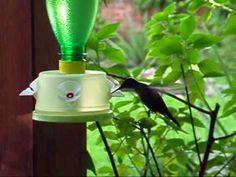 Alimentador para colibríes 03 - YouTube