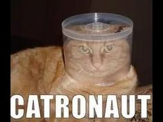 BEST FUNNY CATS IN COUB ПРИКОЛЬНЫЕ КОШКИ FUNNY ANIMALS #17 -  #animals #animal #pet #cat #cats #cute #pets #animales #tagsforlikes #catlover #funnycats Cats are the funniest animals on Earth, they make us laugh all the time! Just look how all these cats & kittens play, fail, get along with dogs, make funny sounds, get angry, sleep, … So... - #Cats