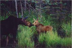 Algonquin Provincial Park, Whitney