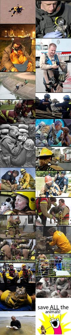 Heroes Do Exist; Saving Animals (Cats, Kittens, Dogs, Puppies, Ducklings, Goats, Koala Bears, Dolphins)