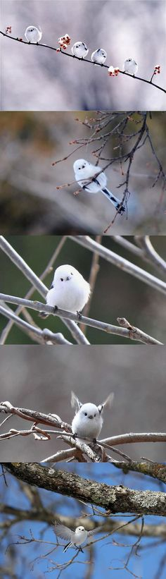 The cutest bird you'll see today...