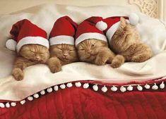Kittens Nestled In Bed Box of 10 Avanti Cute Cat Christmas Cards Cat Christmas Cards, Christmas Kitten, Christmas Animals, Kittens Cutest, Cats And Kittens, Cute Cats, Baby Animals, Cute Animals, Tier Fotos