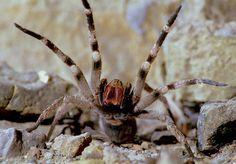 Las 7 arañas venenosas de Argentina – Especial